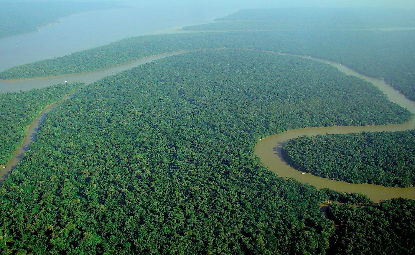 An aerial view of the dense Amazon rainforest of South America.
