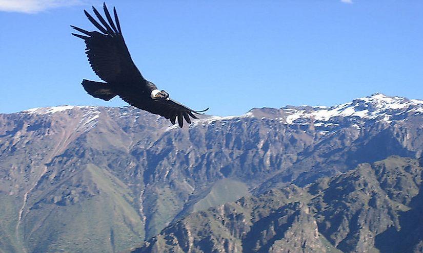 Highest Flying Birds -...