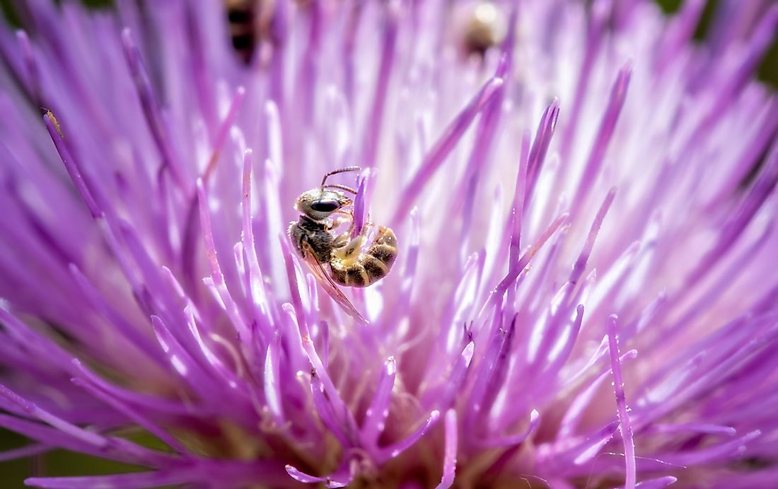 The Halictidae family is collectively known as the sweat bees​.