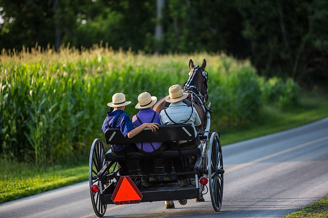 Three young Amish men in a buggy travelling down a country road.