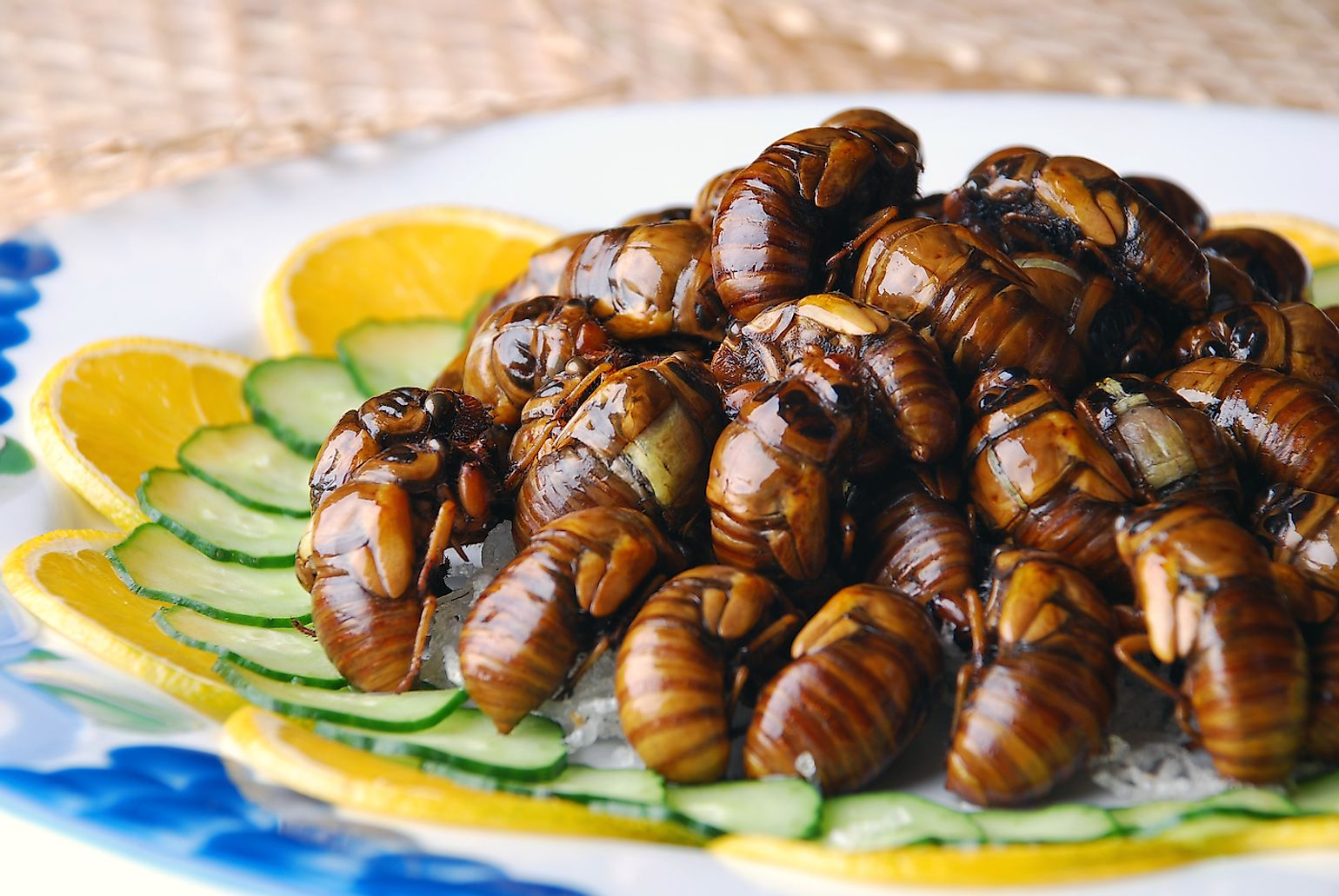 Friend cicadas in China. Image credit: Wxin/Shutterstock.com