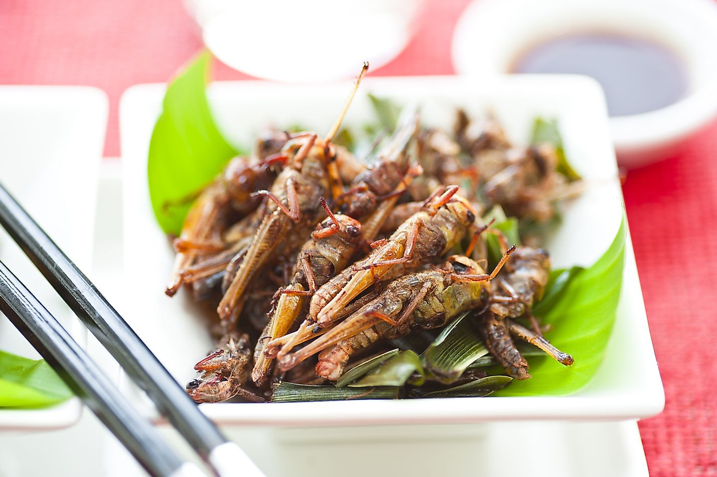 Fried grasshoppers served on a plate. Image credit: p.studio66/Shutterstock.com