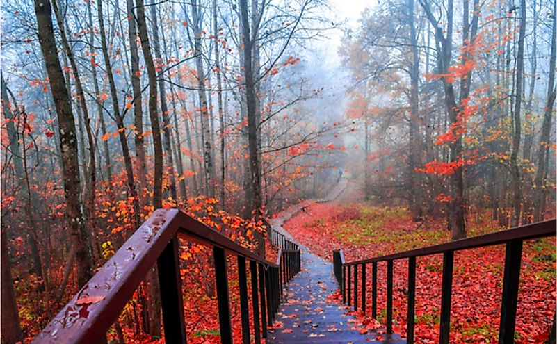 Stairs leading down to a mist enveloped forest in autumn.