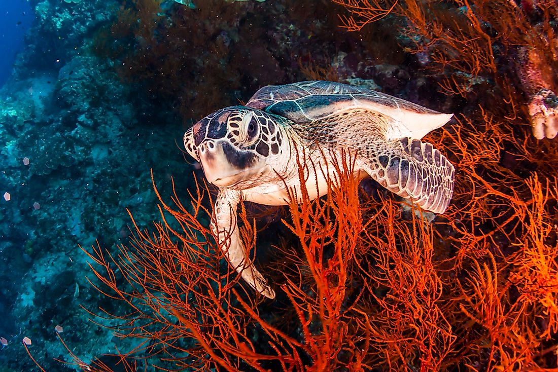 Sea turtles live in the oceans.