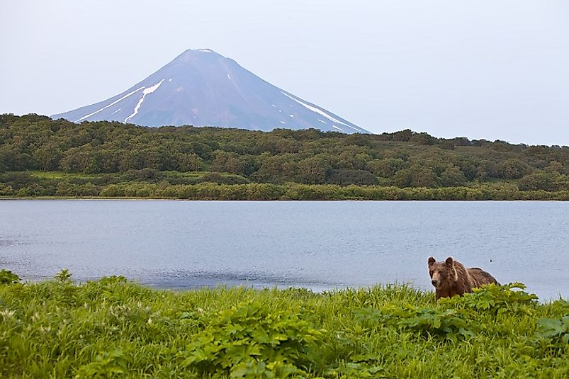 A Brown bear fishes beside a lake, not far from the foot of the volcano in the background, on the Kamchatka Peninsula.