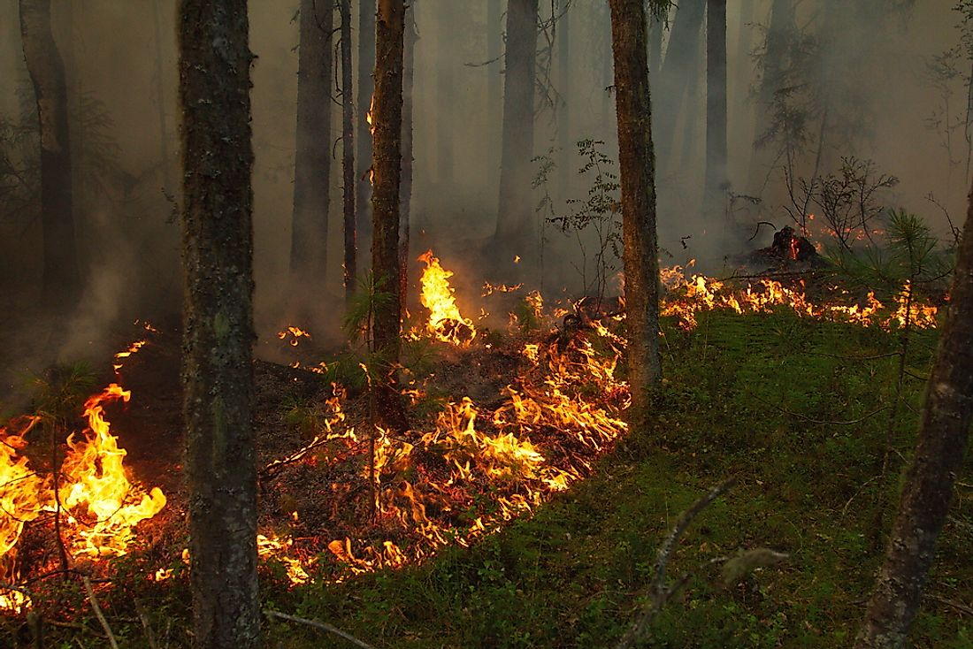 A wildfire burns across the Siberian taiga in 2013. In 2003, this remote area of Siberia was the site of the largest forest fire of all times in terms of acres burned.