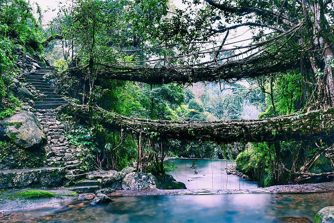 The living root bridges of Meghalaya, in one of the wettest places on Earth, is one of the most beautiful places in India.