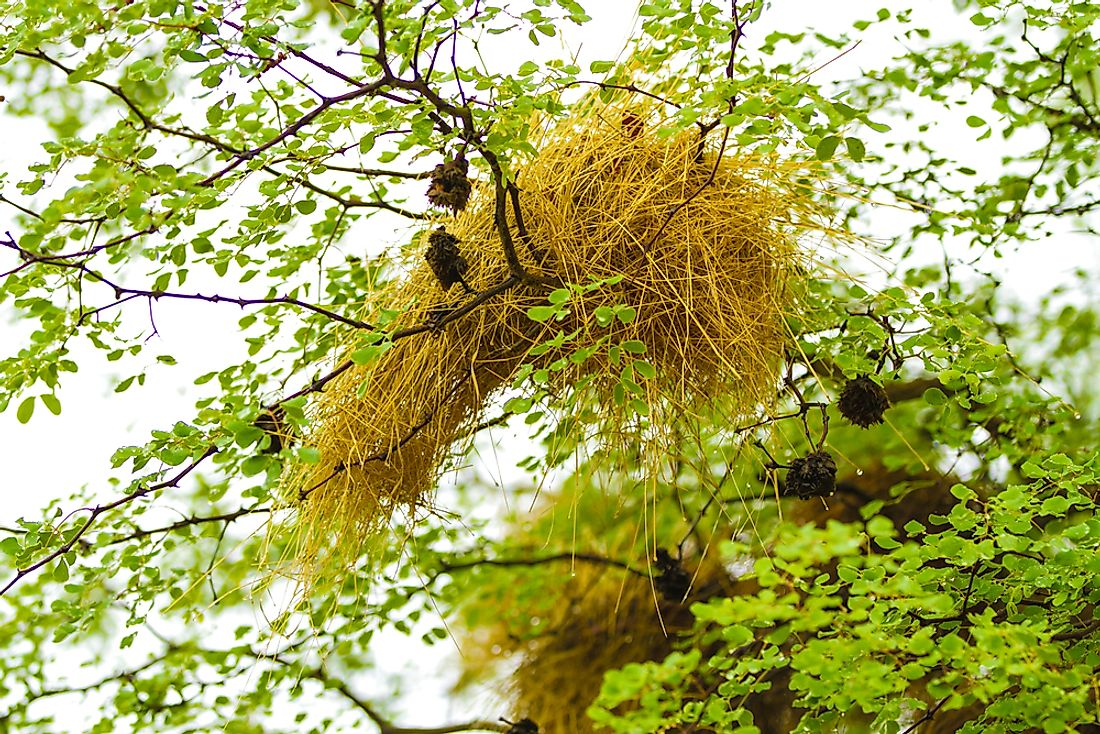 Many different types of bird nests are unique.