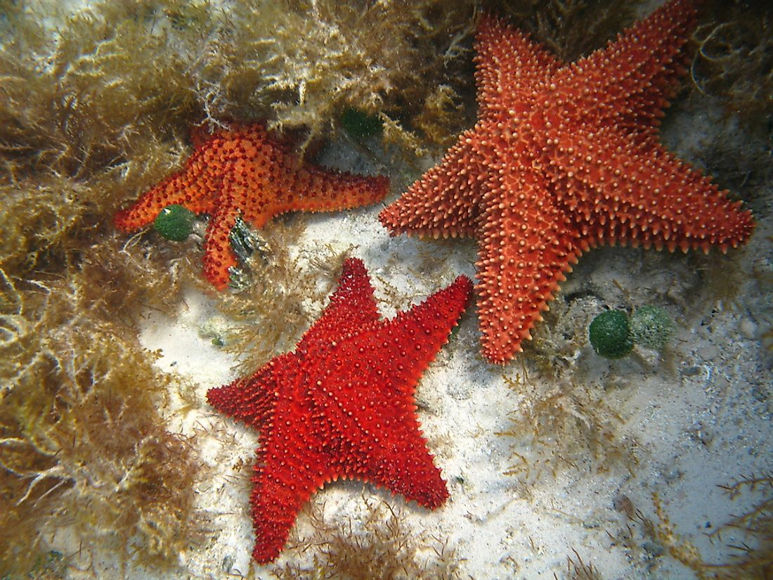 Starfish have upwards of 5 arms, depending on the species.