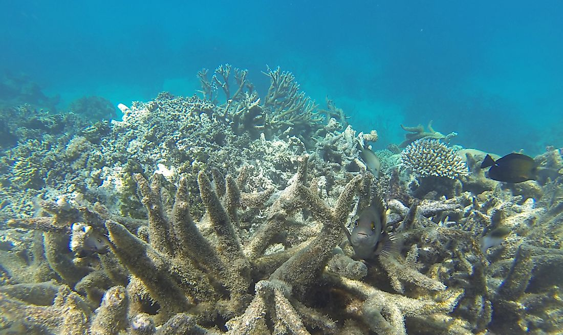 Coral bleaching on the Great Barrier Reef is an example of ecocide.