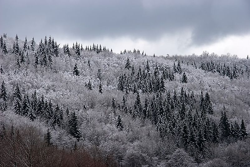 Mixed taiga forests in Northern Europe under the cover of snow.