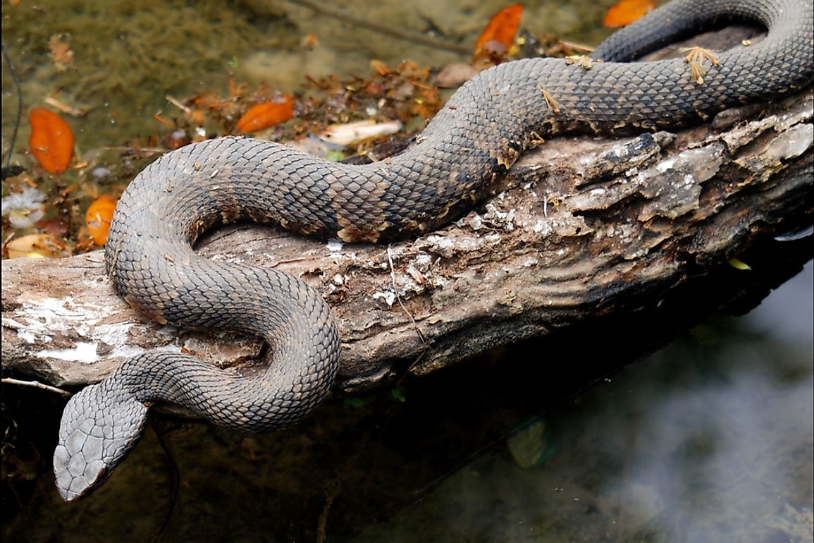 Various types of snakes live in trees, burrows, on the ground, or in water.