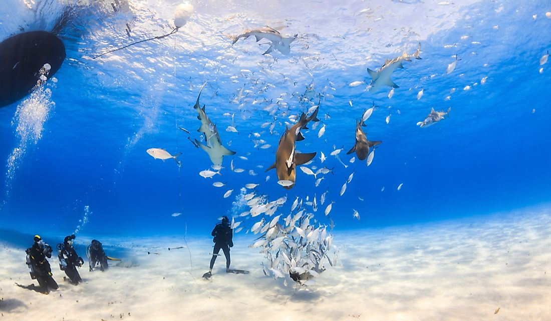 Tourists venture underwater to see Bahamian marine wildlife.