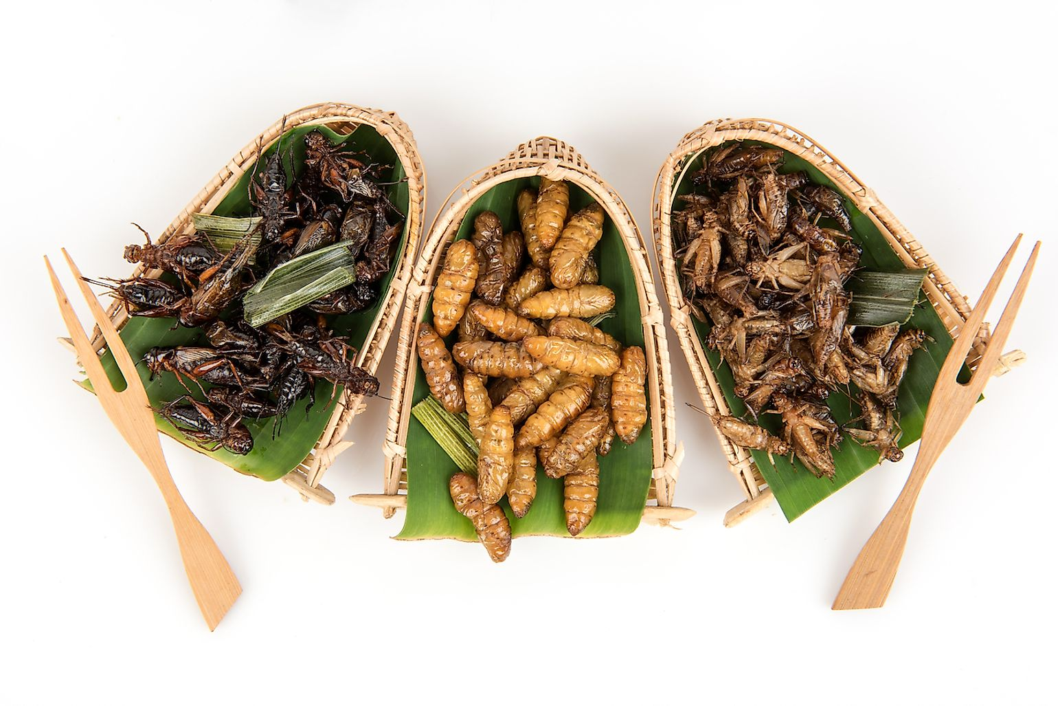 Friend insect snacks in Thailand. Image credit: Wasanajai/Shutterstock.com