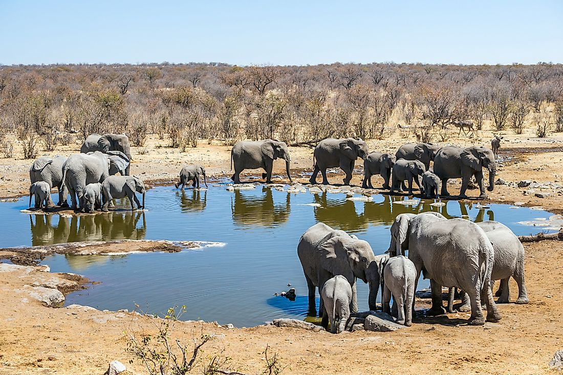 Elephants in Etosha National Park.