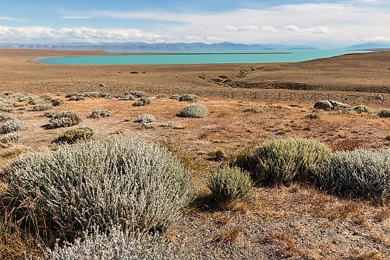 Steppe habitats in the Argentine portion of the Patagonian Desert.