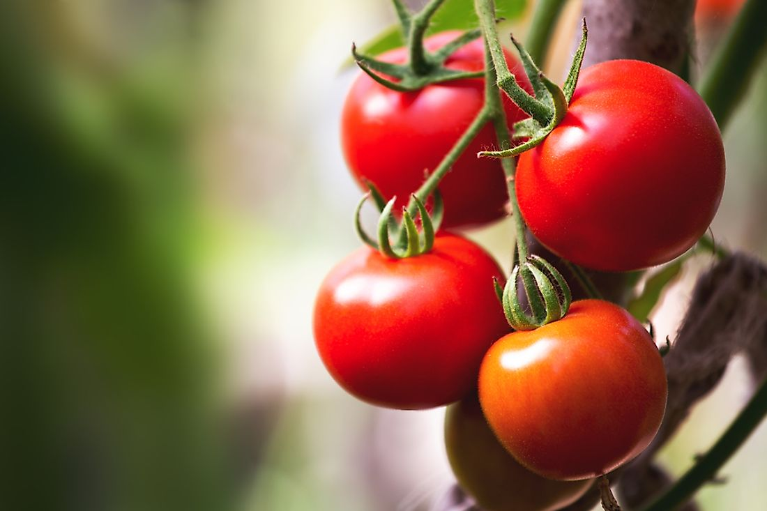 Tomatoes are popular in many types of cuisine around the world.