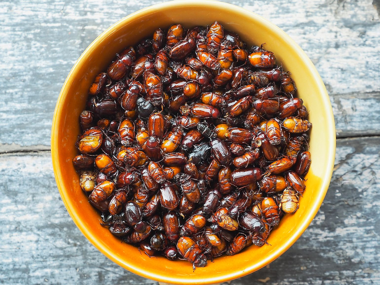 A bowl of deep fried and crispy Ruby roast beetle. Image credit: Eakarat Jugmai/Shutterstock.com