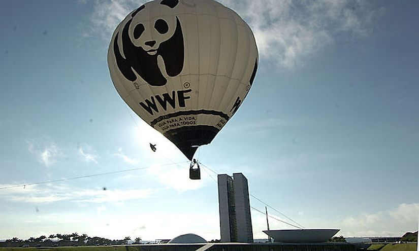 The World Wildlife Fund is one of the most significant wildlife organizations active in the world today.