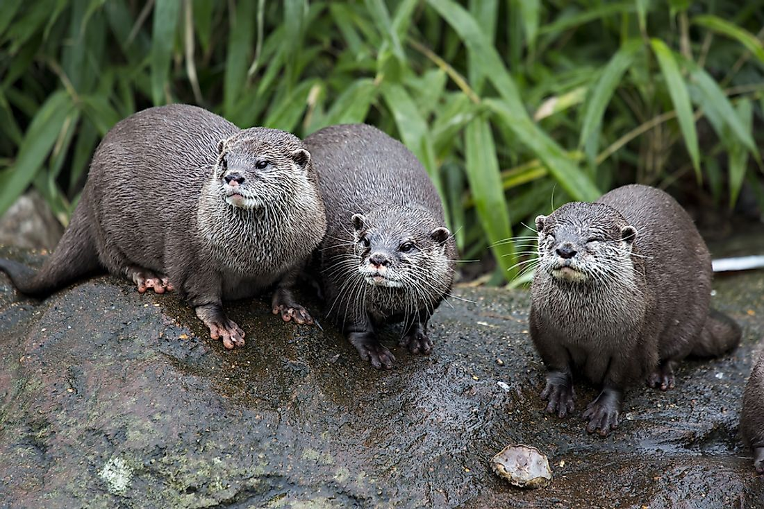 The European otter can be found in Sweden.
