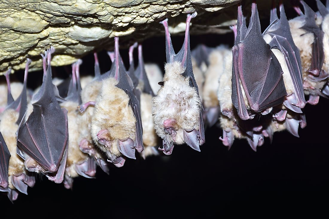 Some species of bats live in colonies of upwards of a million members.