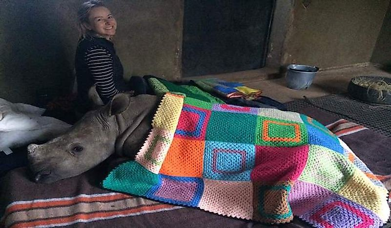 A rhino baby and caregiver both keep warm with blankets donated by Blankets for Baby Rhinos. Photo credit: Blankets for Baby Rhinos.