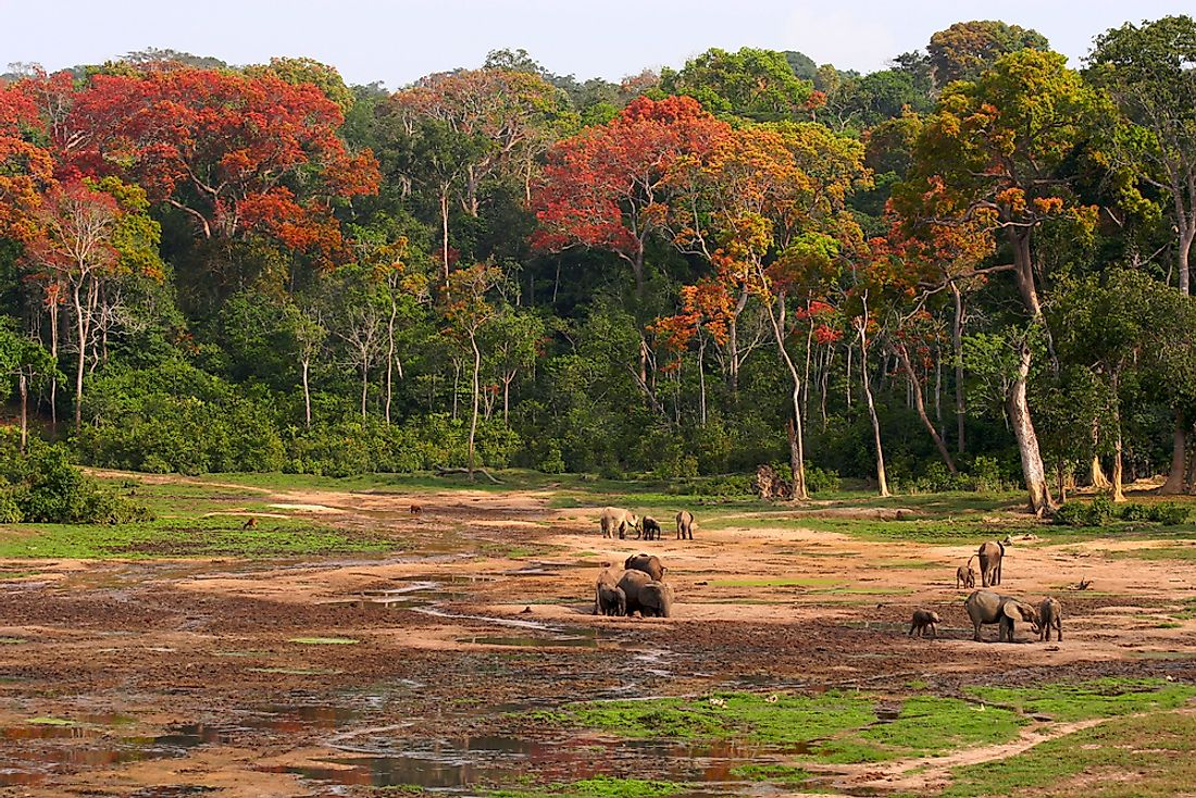 A forest clearing in the Central African Republic.