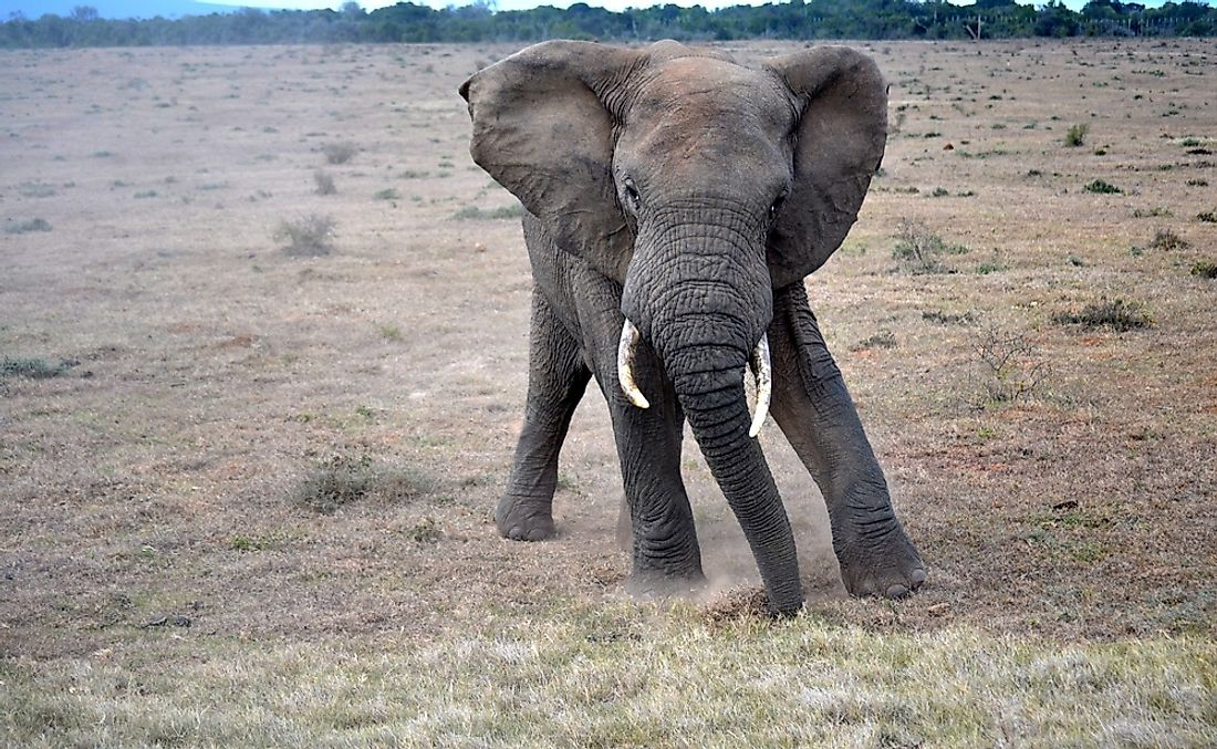 Elephants are known for being one of the world's most emotionally intelligent animals.