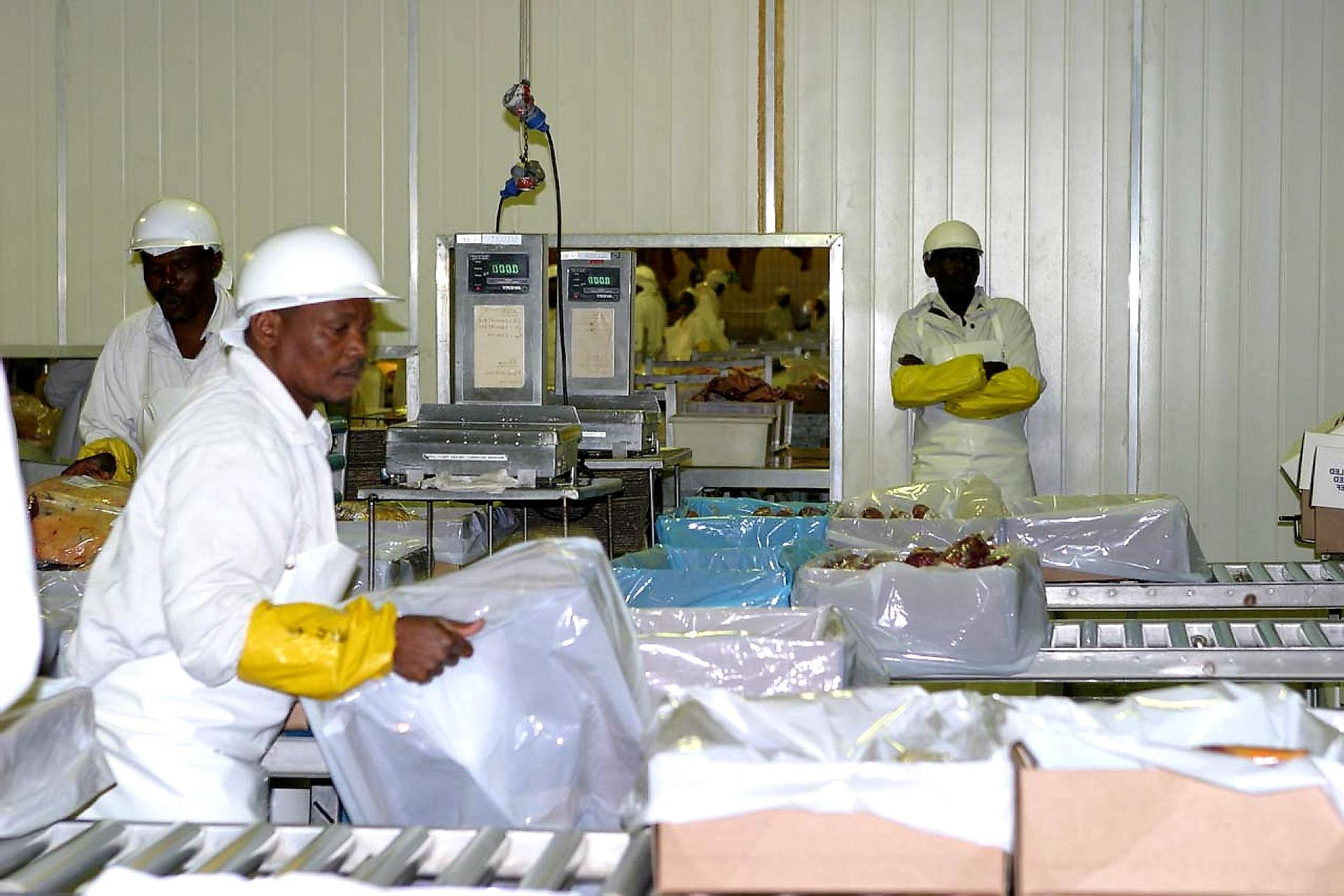 Meat packers preparing beef for export.