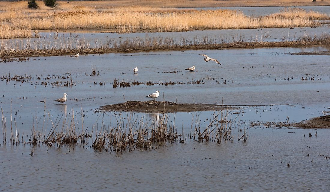 Salt marshes provide food sources for many species of wildlife.
