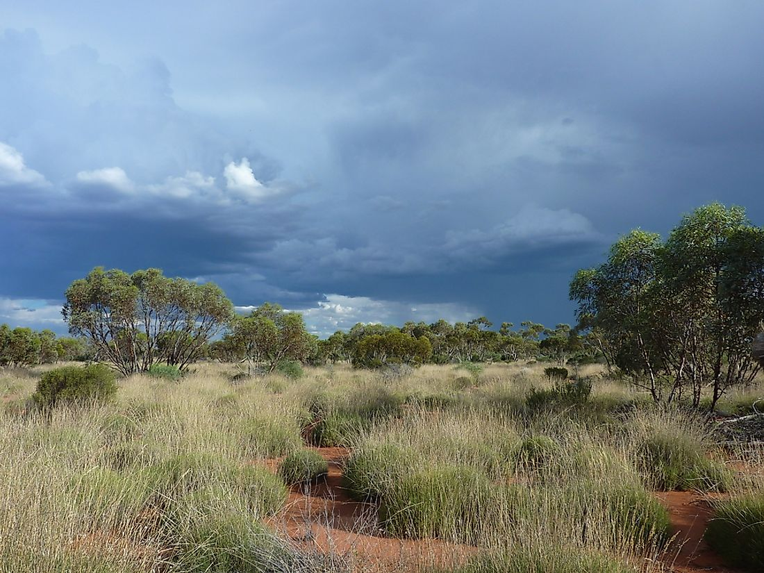 Australia's Great Victoria Desert supports a wide variety of flora and fauna.