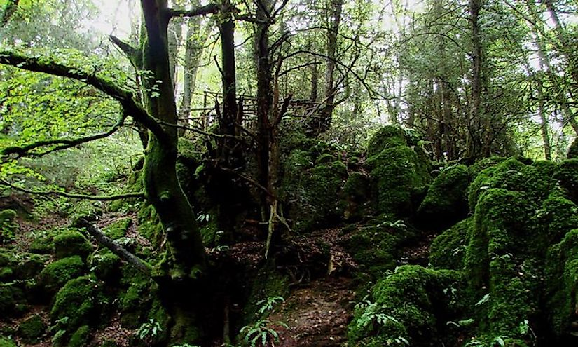 Part of Puzzlewood, near Coleford, showing scowles overgrown by trees and moss.