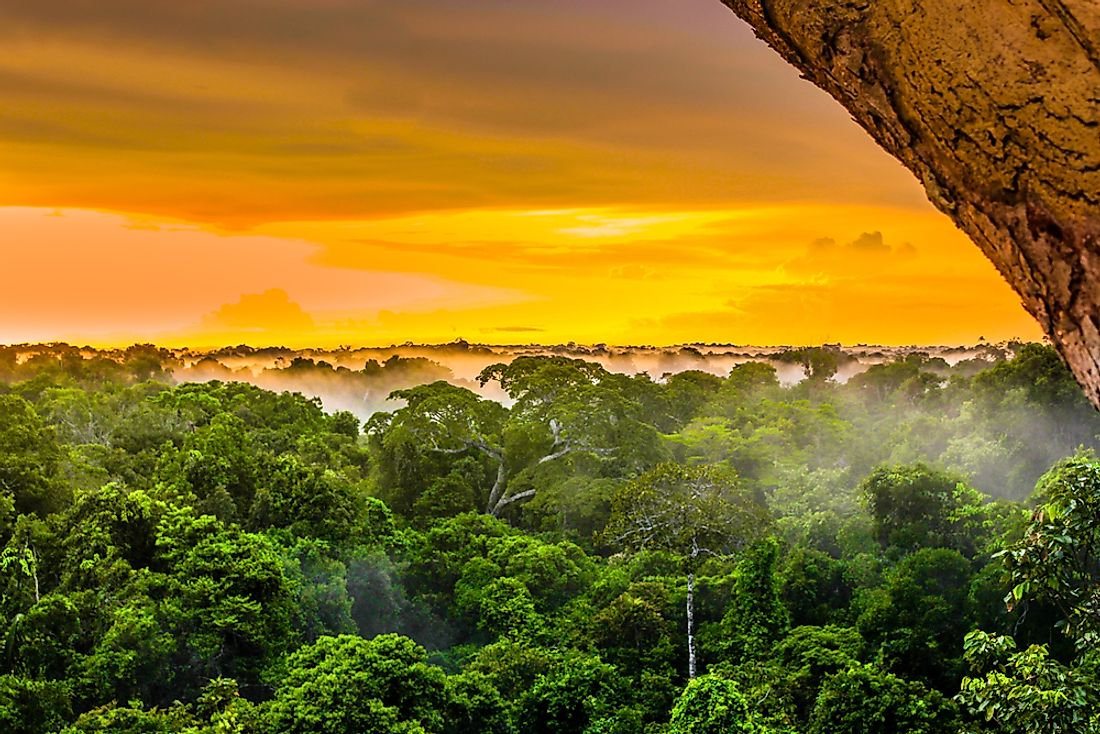 The majority of the world's rainforests are found in the Americas.