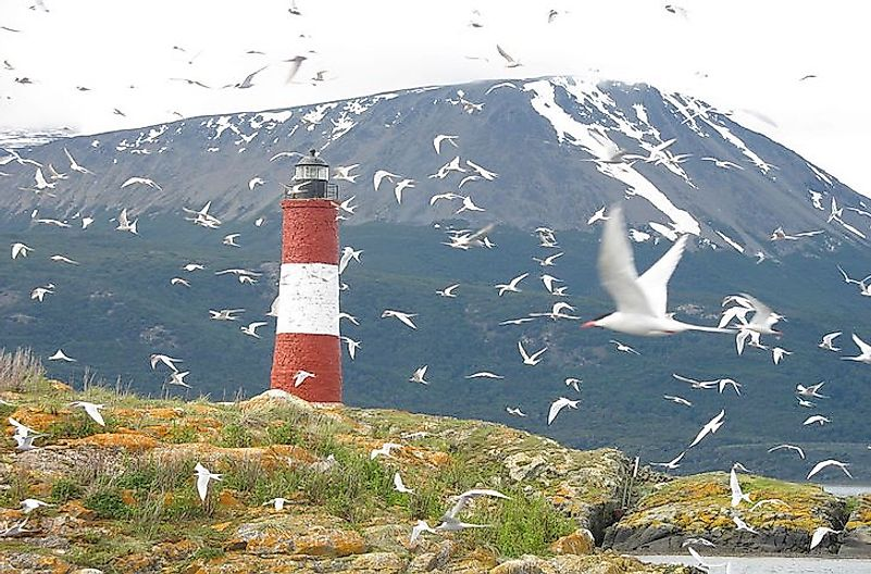 Arctic terns, the birds with the longest migratory route.