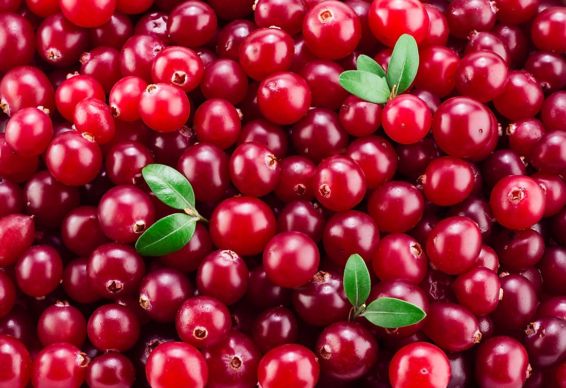 The consumption of cranberries has been increasing worldwide in recent years.