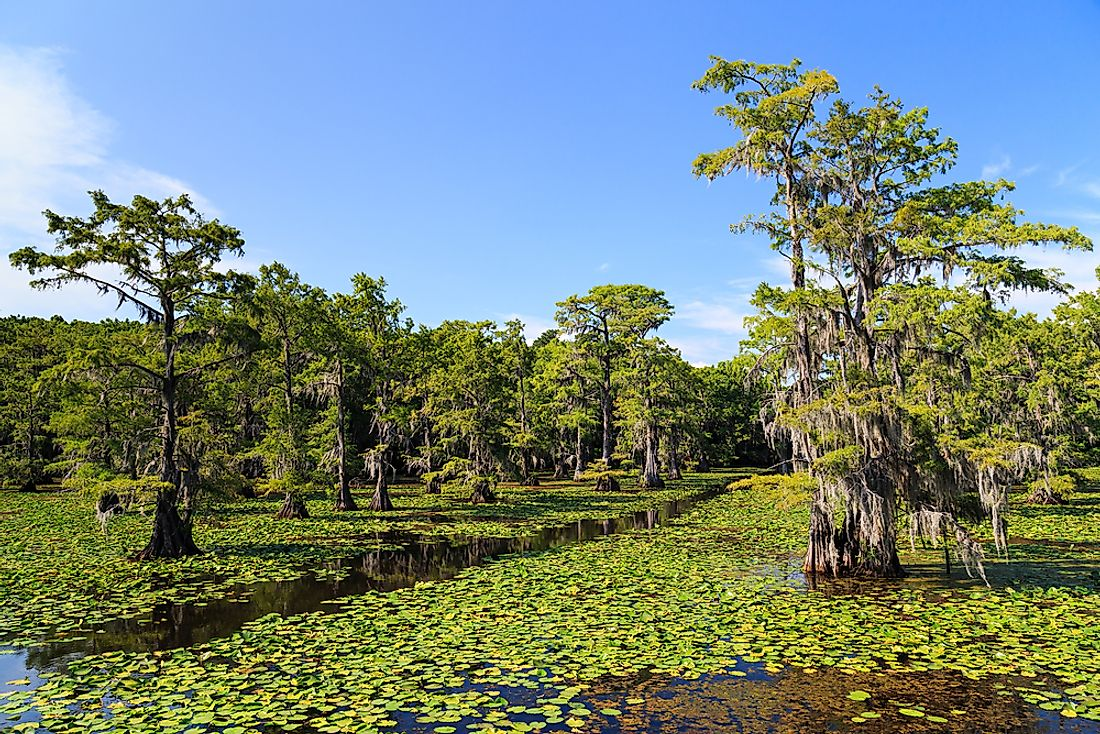 Caddo Lake, one of Texas's few natural lakes.