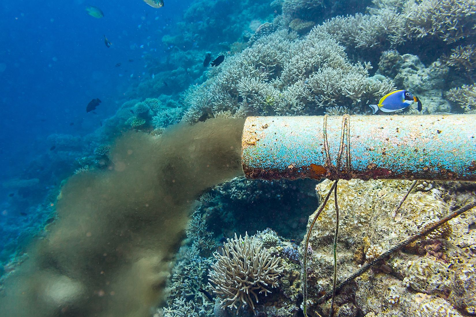 An underwater sewer pipe dumping waste into the ocean. Image credit: stockphoto-graf/Shutterstock.com