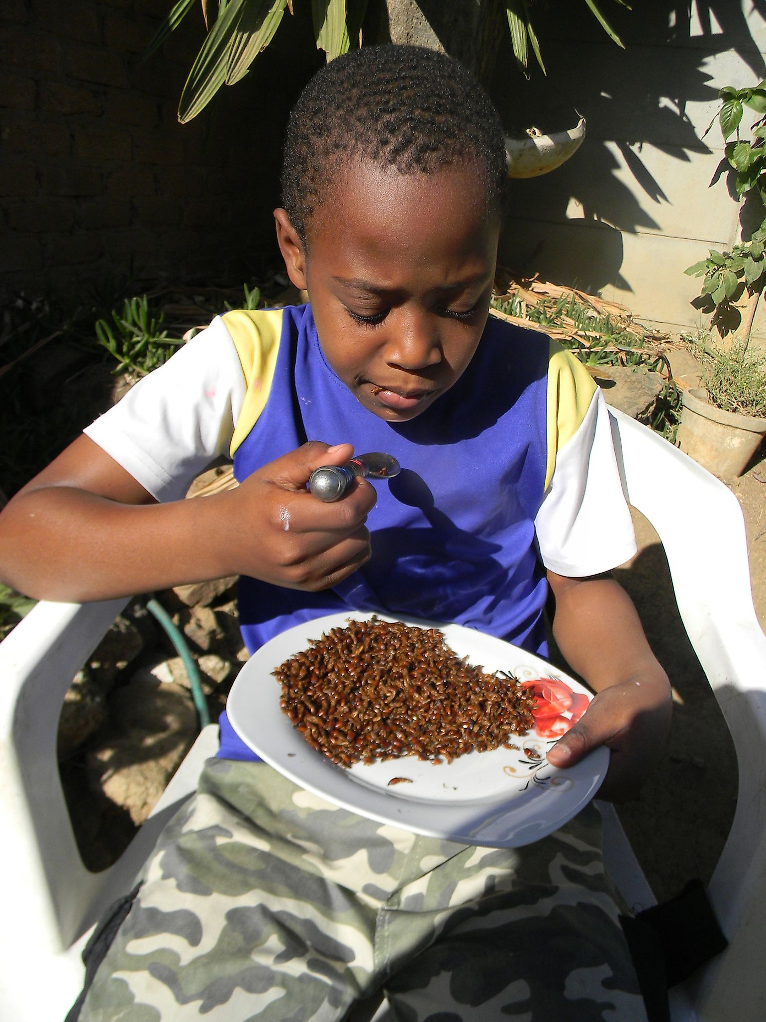 African boy eating dried termites which are a popular delicacy in many African countries. Image credit: CECIL BO DZWOWA/Shutterstock.com