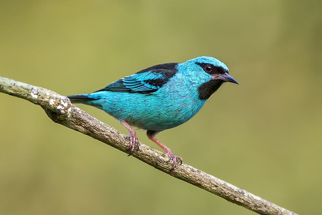 Blue Animals That Exist In Nature Worldatlas