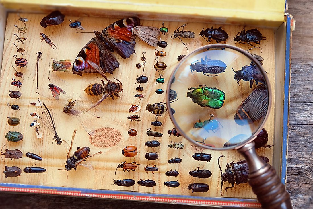 There are over 925,000 identified species of insects.