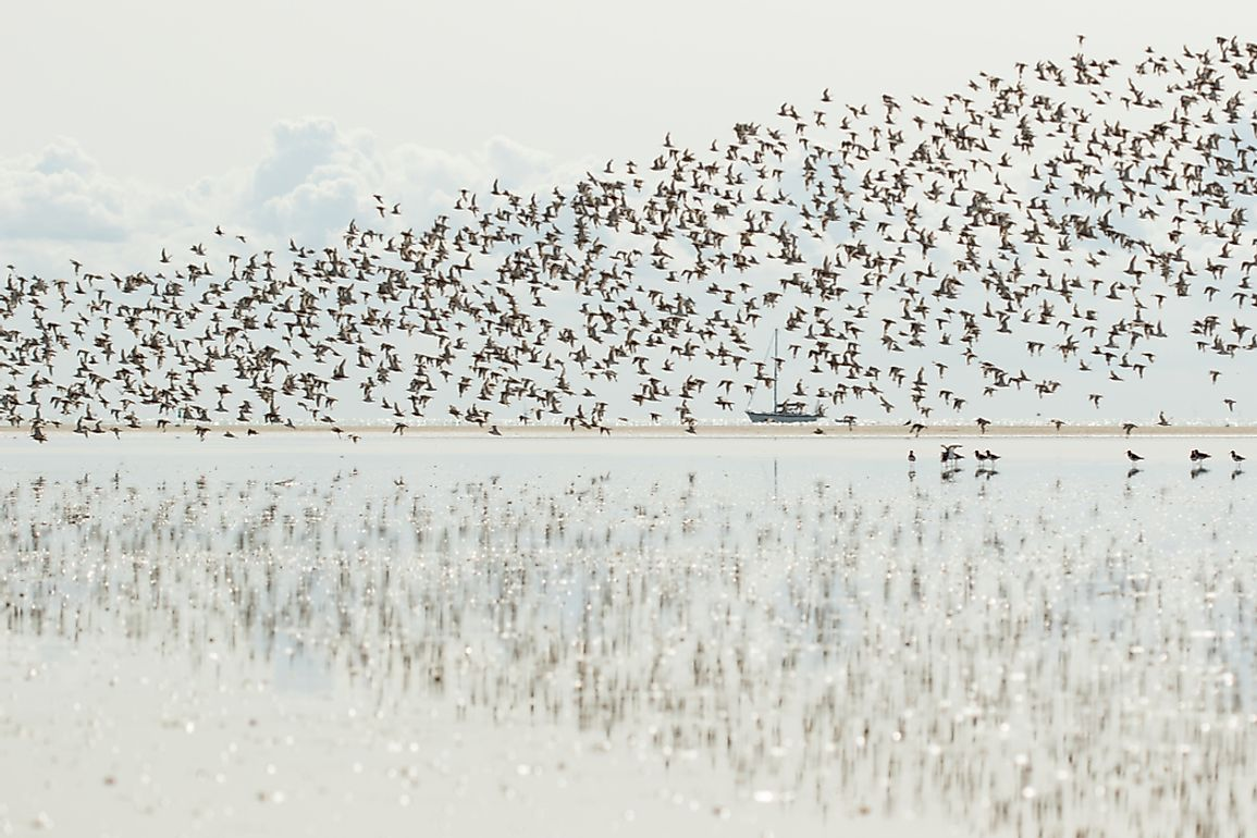 Many species of birds migrate south to avoid cold winters.