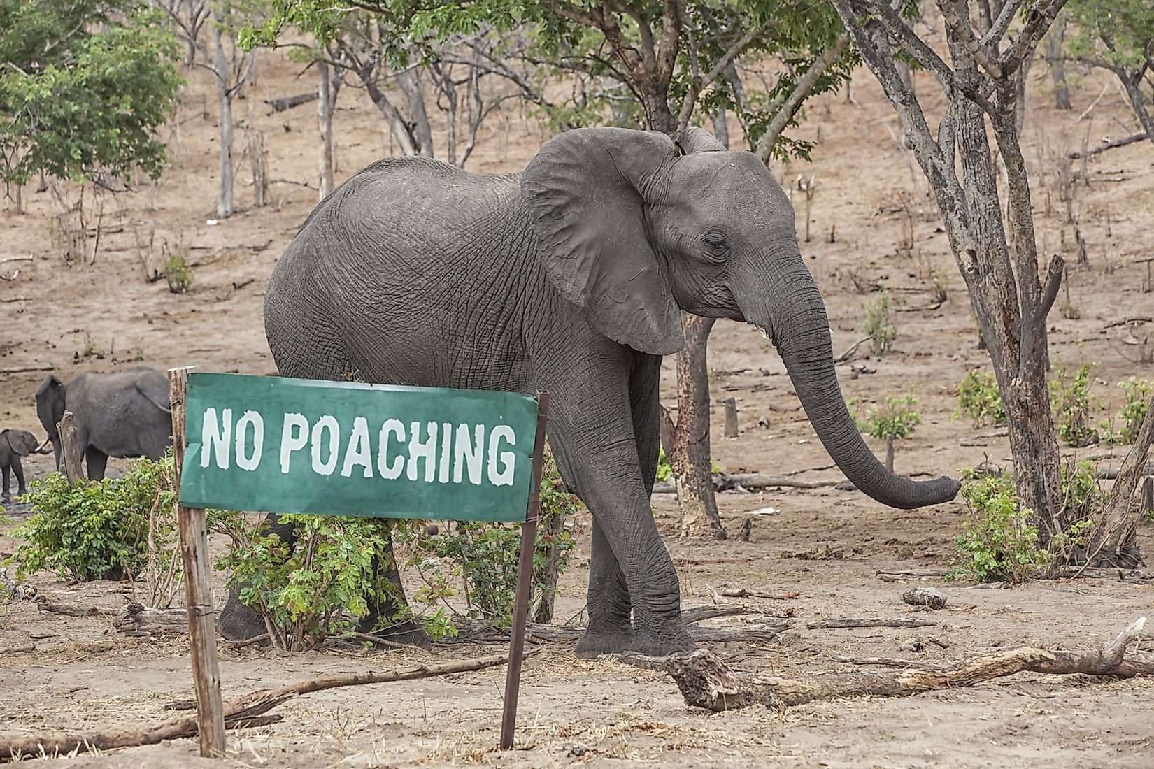 Poaching of wildlife for illegal wildlife trade is one of the biggest threats to the world's wildlife. Image credit:  Michael Wick/Shutterstock.com