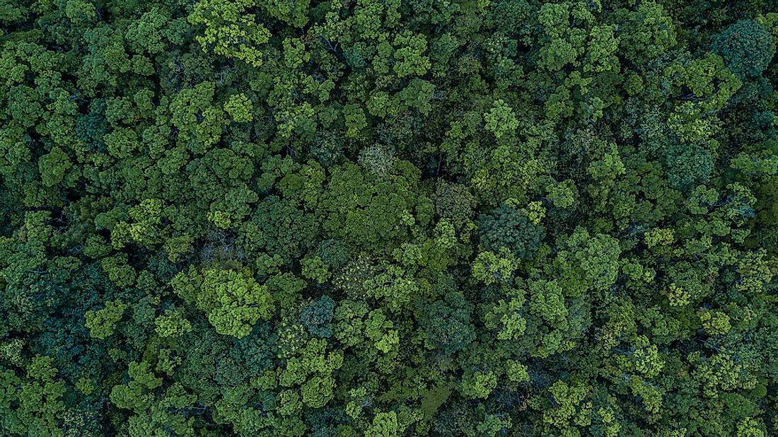 A forest in Thailand. Asia is the world's fourth most forested continent.