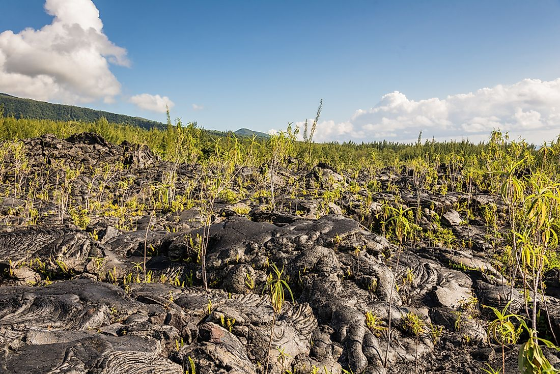 Signs of ecological succession in a lava field.