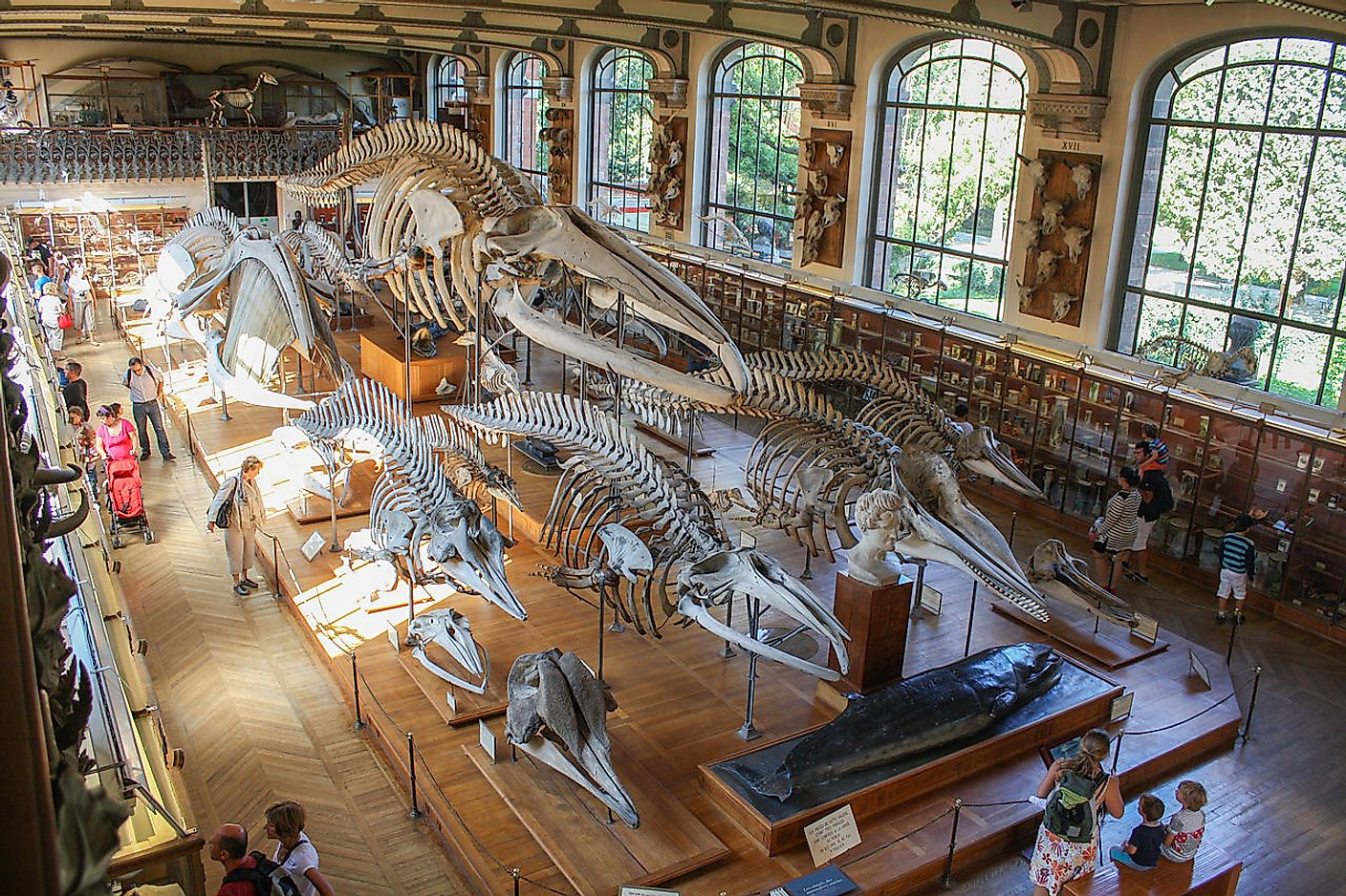 Museum of Natural History, Paris. Image credit: Shadowgate from Novara, ITALY/Wikimedia.org