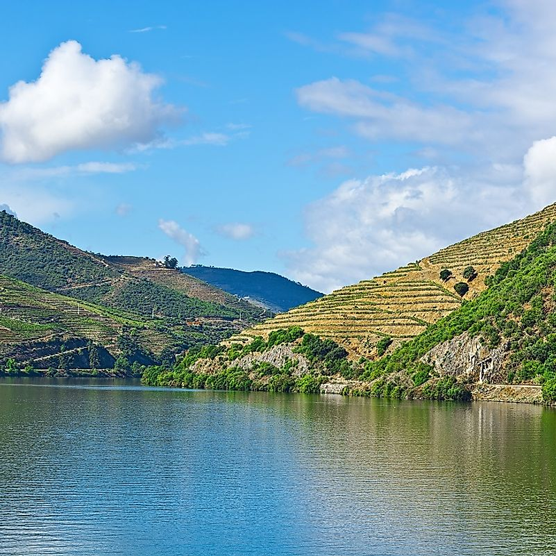 Vineyards cover these hills along the Douro River's banks in Portugal.