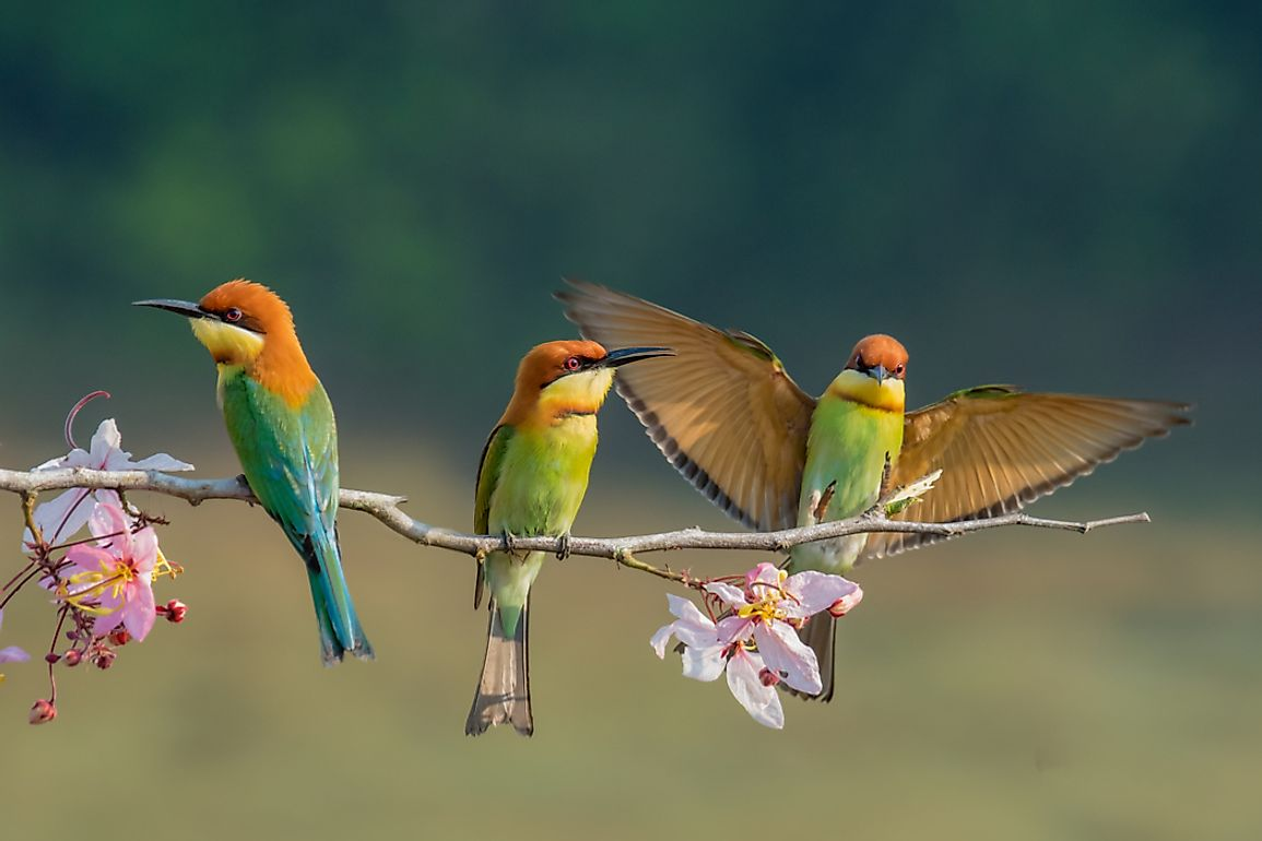 According to modern classification, birds are part of the group Aves.