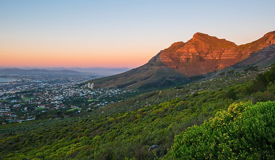 This hillside montane forest in Table Mountain National Park is located entirely within the city boundaries of Cape Town, South Africa.