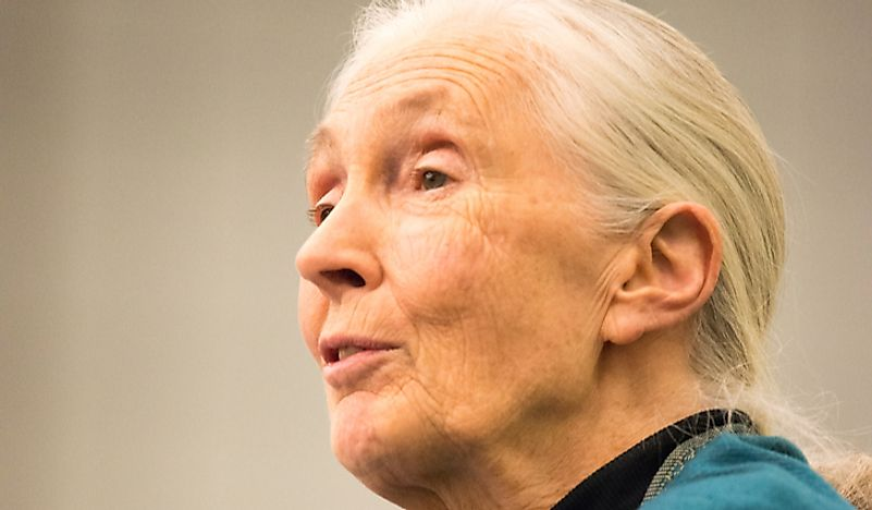Jane Goodall in 2015. Editorial credit: Kelleher Photography / Shutterstock.com.
