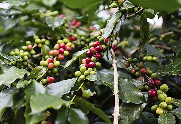 Top 10 coffee producing countries 2014 worldatlas com